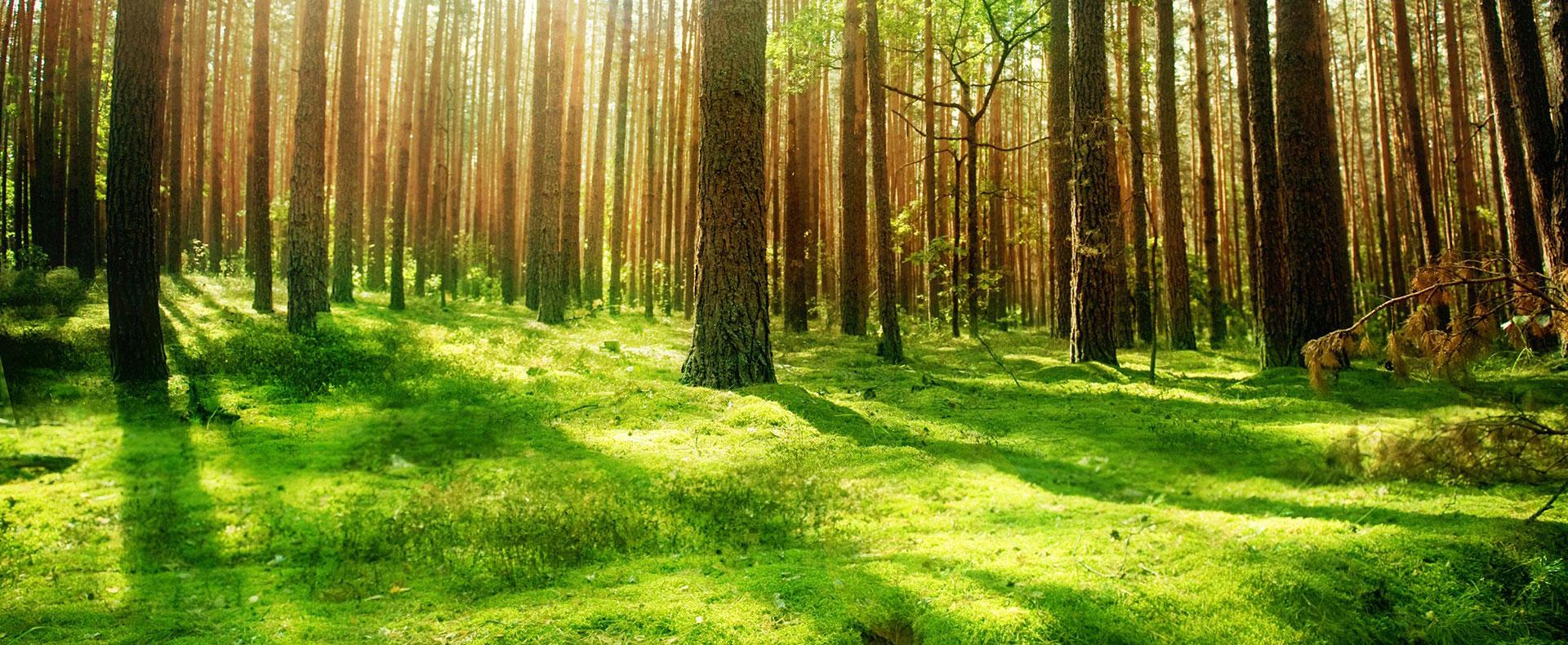 Miljö & Kvalitet